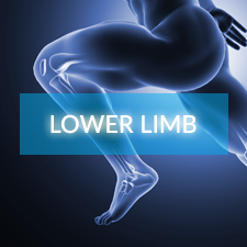 lower_limb